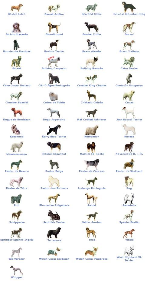 Raças de cães raras
