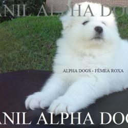 ALPHA  - SFFR-2 BOOK MAIO 2014