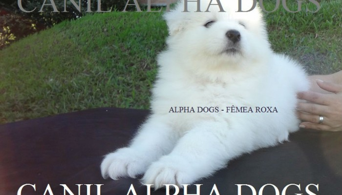ALPHA  - SFFR-2 BOOK MAIO 2014
