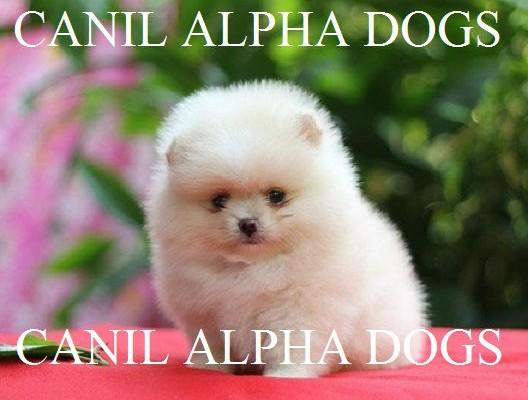 alpha lulu 8