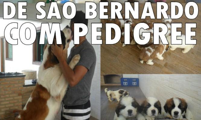 Vendo São Bernardo