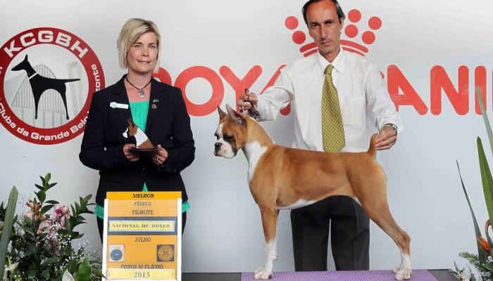 Shiva - Vencedora da Nacional 2013 : melhor fêmea filhote