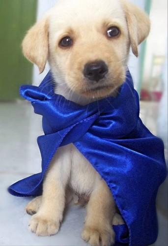Kal-El - Cachorro da semana