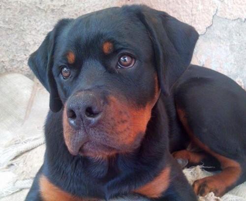 Zeus, o cachorro da semana