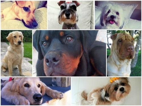 Os cachorros do dia - Setembro 2014