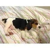 beagle mach