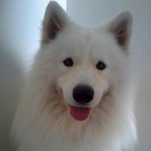 Aron, o cachorro do dia - Otubro 2014
