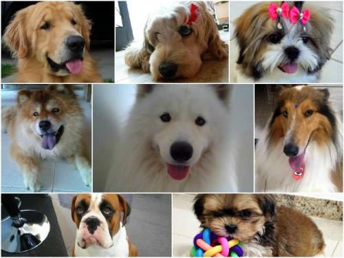 Os Cachorros do dia - Otubro 2014