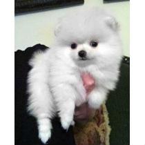 cachorros-raca-23187-MLB20242433890_022015-Y