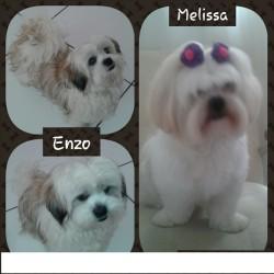 Melissa - Enzo