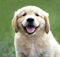 Cachorros Brasil