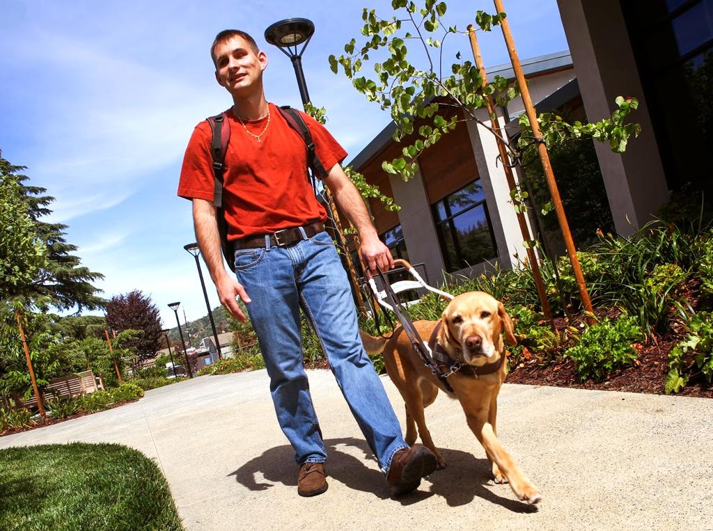 Cão-guia para cegos