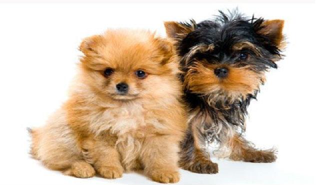 Nome-para-Cachorros-pequenos-6