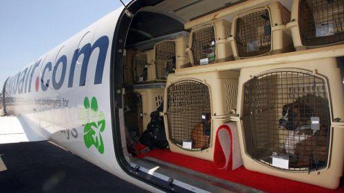 Cachorros no avião